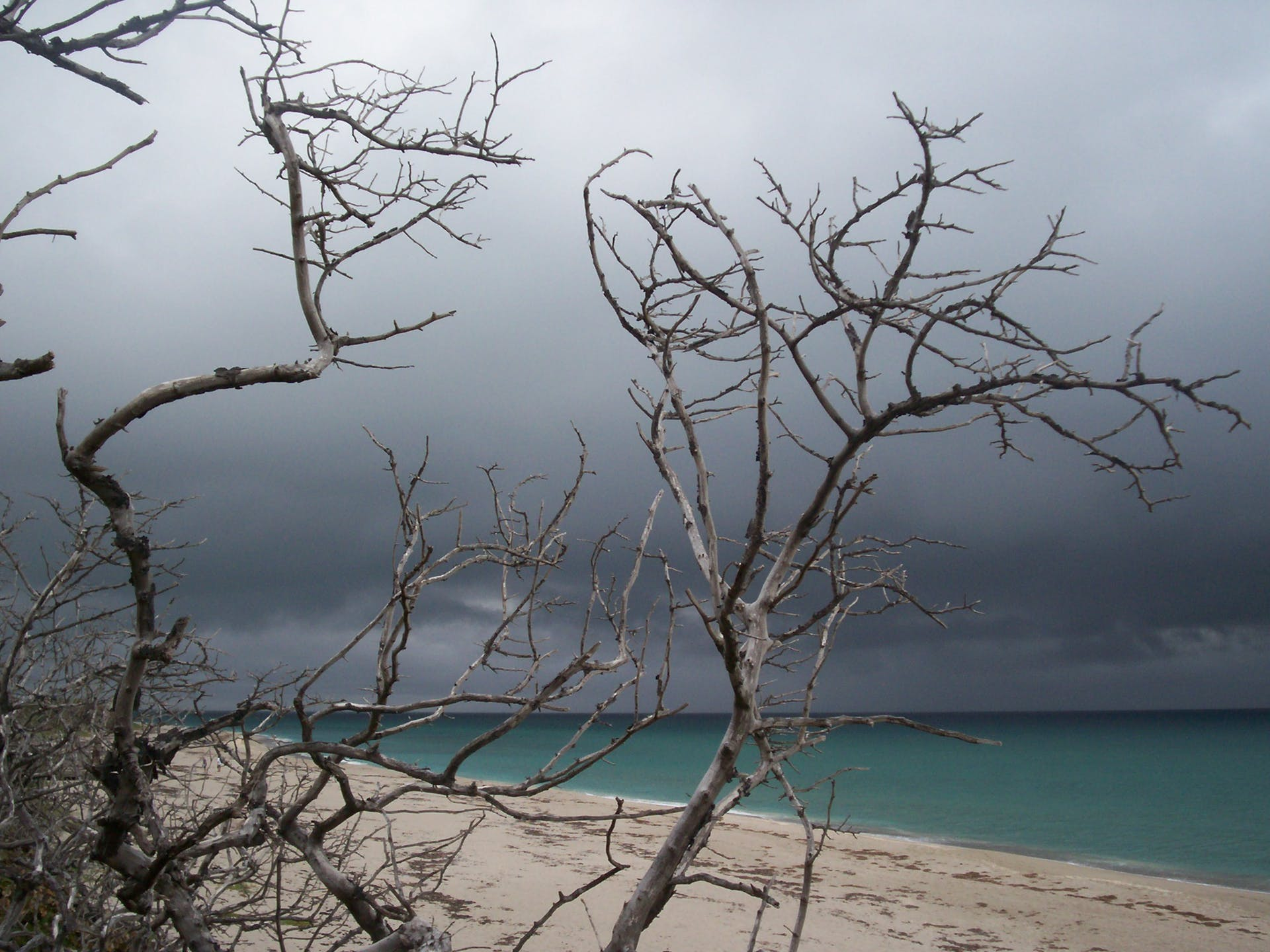 storm trees bare trees storm beach thunderstorm