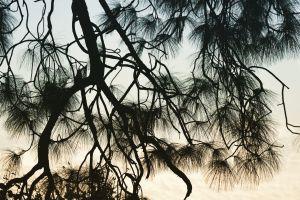 abiphotography minimalist greenery scenery evening tree