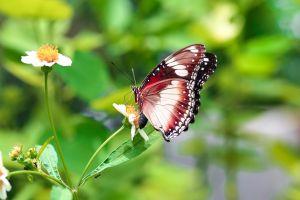 animal butter butterfly macro