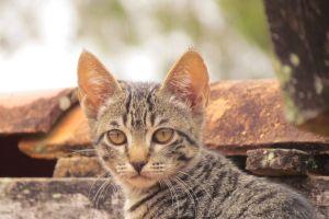 animal feline cat