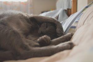 animal photography cute cute animals sleep sleeping cat