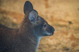 animal photography fur mammal nature wild close-up side view wildlife daylight wild animal