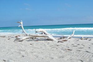 beach driftwood ocean