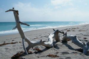 beach ocean driftwood