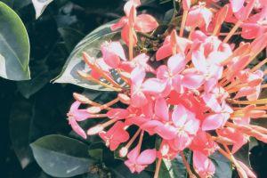 beautiful flowers flower red flower