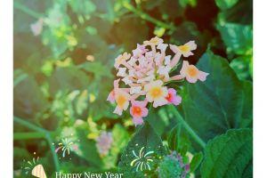 beautiful flowers flower spring flower