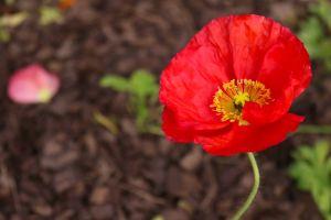 beautiful flowers flowers flower