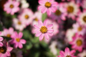 bloom blur beautiful nature flowers delicate beautiful flowers focus flora growth