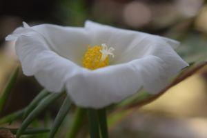 blue flowers flower beautiful flowers artificial flowers bell flower birds of paradise flower