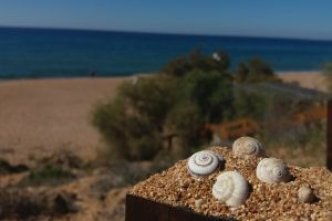 blue sky sand bluesky green brown beach snail shell wallpaper