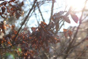 blur blurry autumn decoration ray of light sun flare sunny ray of sunshine sun rays mother nature beautiful