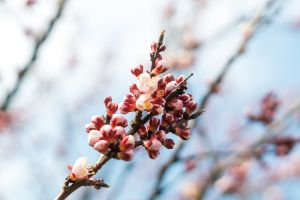 branches close-up botanical botanic beautiful bloom nature blurred flowers colors