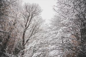 branches cold wood frost ice trees weather landscape park scene