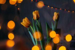 bright evening lights tulips design darkness colors blossom petals flowers