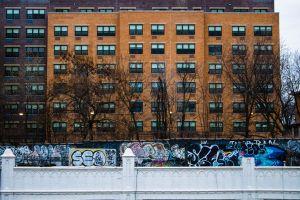 building #outdoorchallenge graffiti trees