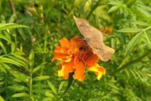 butterfly flower yellow