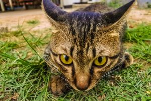 camera young playful curious feline happiness tabby surprised purebred sitting