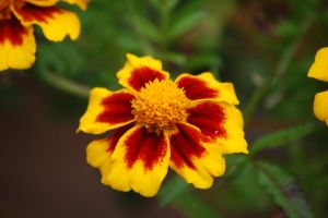 close up flower flower yellow pretty close up red wildlife yellow flower pretty flower flower pot