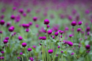 close-up flowers garden summer color bright blur blossom lilac blooming