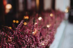 close-up lights plants colors garden blur