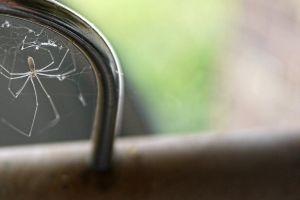 close up spider phobia blur web light arachnid