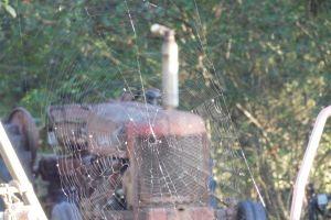 cobweb outdoor nature