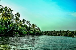 coconut trees palm trees trees scenery water nature tropical scenic