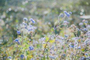 colorful flora sunny flowers growth color petal blur field flower