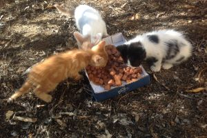 cute animals kittens animal photography cats animal eating