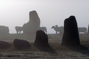 dawn nature mist sheep stone circle misty outdoor