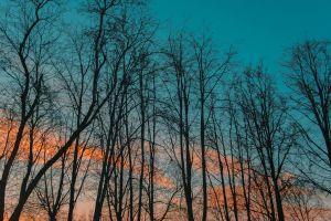 dawn trees scenic