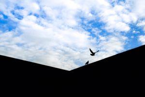 daylight flying sky clouds landscape landing blue minimalism wall scenic