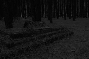 death minimalism black and white forest floor pine jungle black and-white grave stones pine trees tree