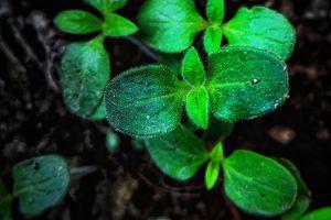 depth of field flora natural maturation green organic environment grow fresh garden