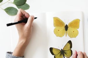 design draw butterflies creative drawing pen wings beautiful artistic hands