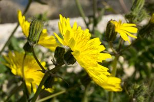 desktop backgrounds zoom flowers italy sun yellow
