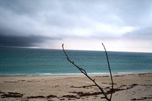 driftwood storm empty beach beach