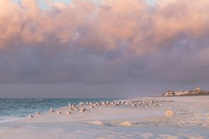 early morning morning sun beachlife sunrise morning light beach