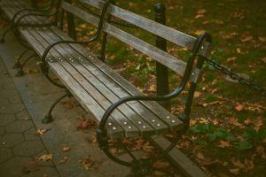 empty bench park growth grass green park bench daylight environment garden