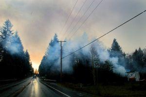environment dawn weather trees light fog pavement mist nature landscape