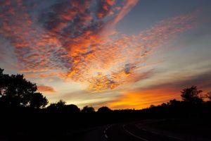 evening sun tree orange #outdoorchallenge night #mobilechallenge black