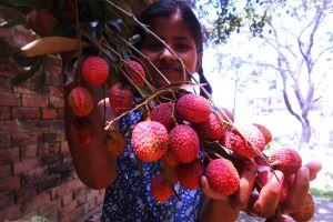 farm farm field fresh harvest fresh fruits kid harvest young natural nature