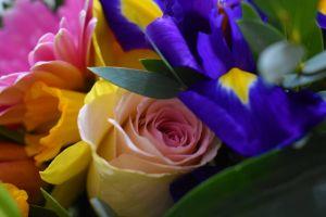feast flowers colors