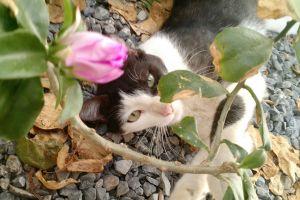female flower cat