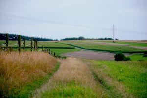 fence road woods vegetation grass
