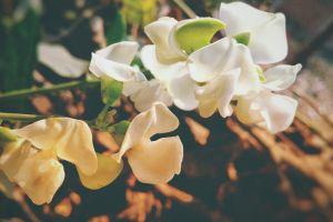 field of flowers flower field blurr summer #outdoorchallenge hdr blurred sunshine summer flower green leaf