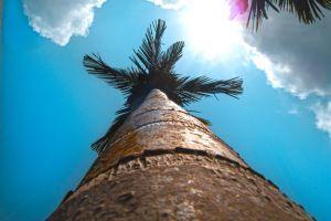 flare lens flare #minimalism #minimalist minimalist sun clouds sky cloud coconut