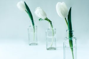 flora blossom tulips flowers bloom bottles petals