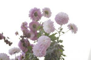 flower beautiful flowers natrural pink flowers nature mother nature pink flower