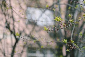 flower branch light season garden tree growth dawn beautiful park